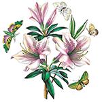 Lily Flowered Azalea
